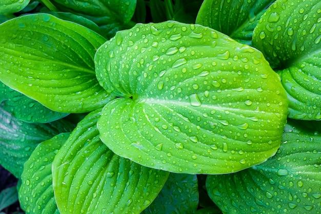 Зеленые листья с каплями воды