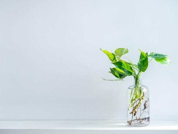 透明なプラスチック製のボトルに水と緑の葉。