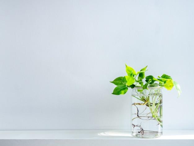 透明なプラスチックの瓶に水で緑の葉。