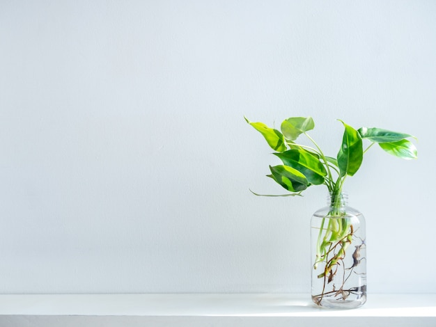 Green leaves with water in transparent plastic bottle.
