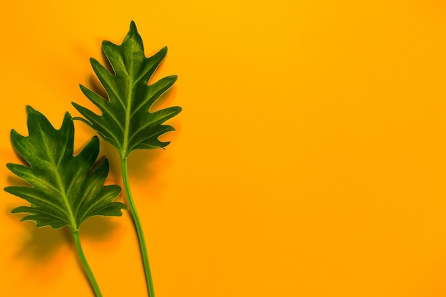 Green leaves of on yellow background and copy space.