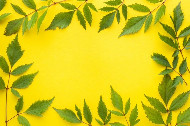 Green leaves on yellow background. summer concept.