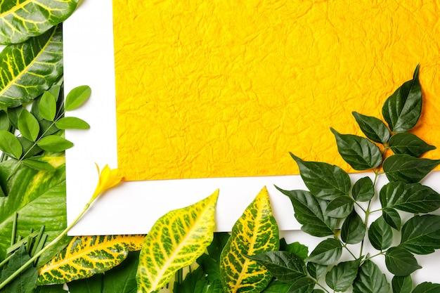 Green leaves on yellow background with copy space