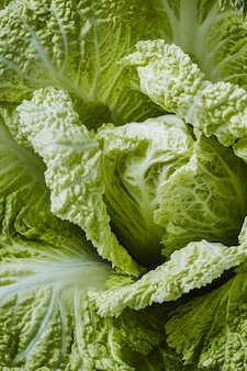 Green lettuce close-up wallpaper