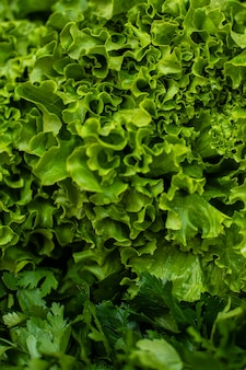 Green lettuce and parsley. grass background: parsley and fresh salad.