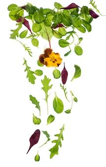 白で隔離される緑のレタスサラダの葉