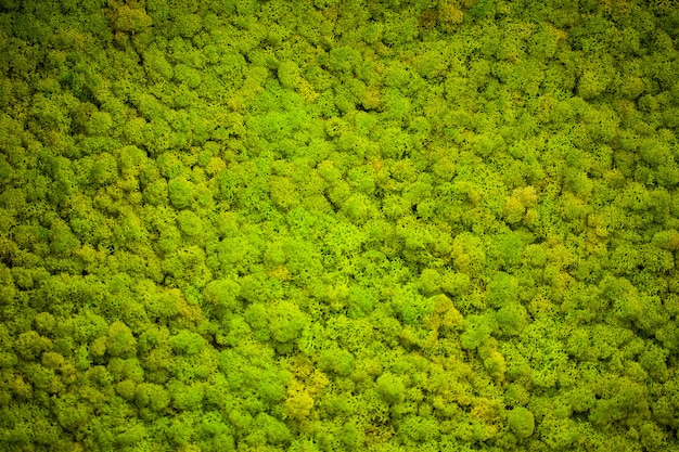 Green lichen, moss wall background