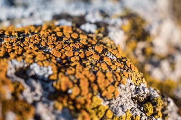Green lichen on the stones