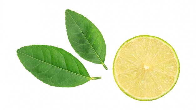 Green lime and leaf on a white background.