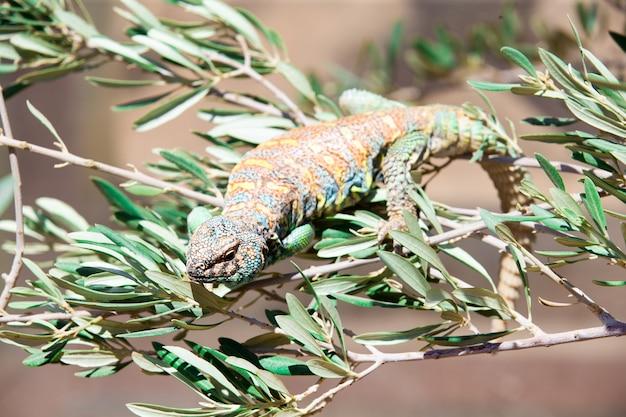 Зеленая ящерица - зеленая ящерица с длинным хвостом, стоящая на куске дерева.