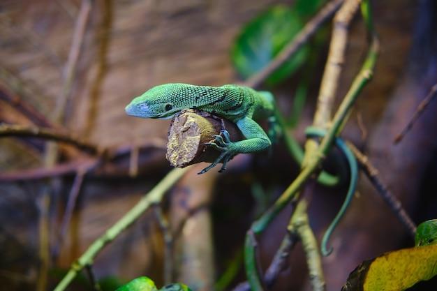 木の枝に緑のトカゲ