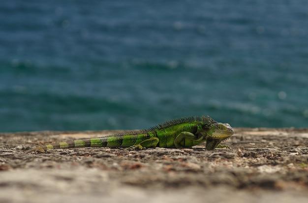 緑のトカゲが石の上に座っています