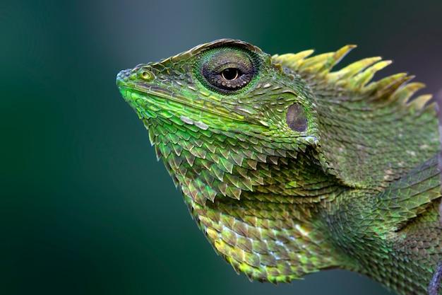 배경이 흐릿한 녹색 도마뱀
