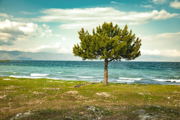 Зеленое одинокое дерево и озеро под небом
