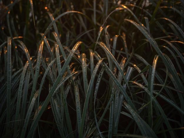 검은 바탕에 녹색 긴 잎. 갈대는 어두운 물에 남는다.