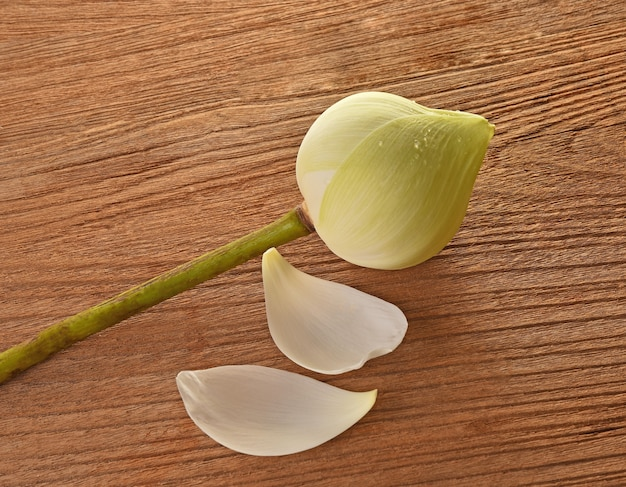 Green lotus flower on wood background