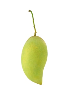 Green mango fruit isolated on white background. tropical fruit in thailand