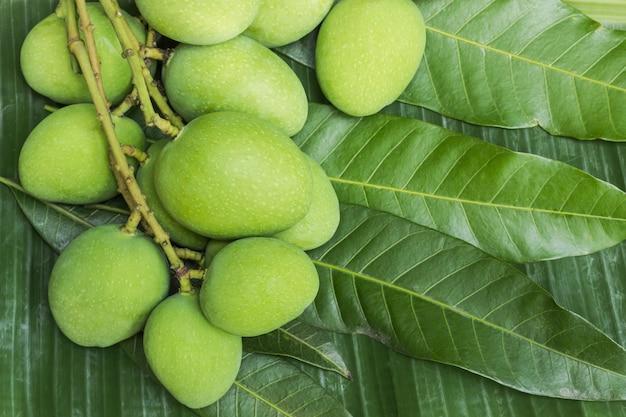 葉の背景に緑のマンゴー