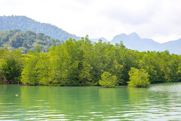 Green mangroves bent over the river in the tropics of asia against the backdrop of mountains