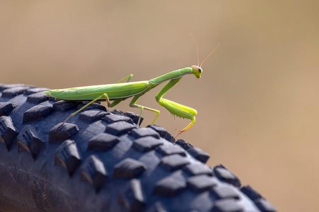 Зеленый богомол на велосипеде крупным планом