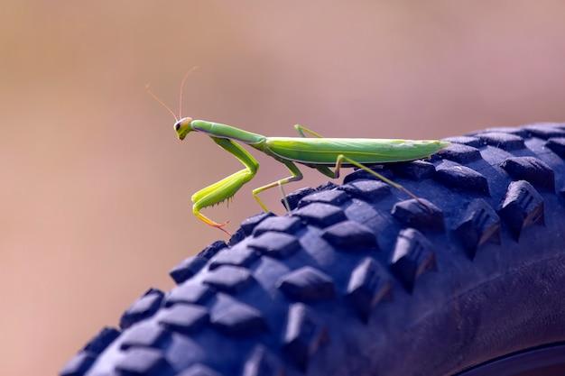自転車の車輪のクローズアップの緑のカマキリ