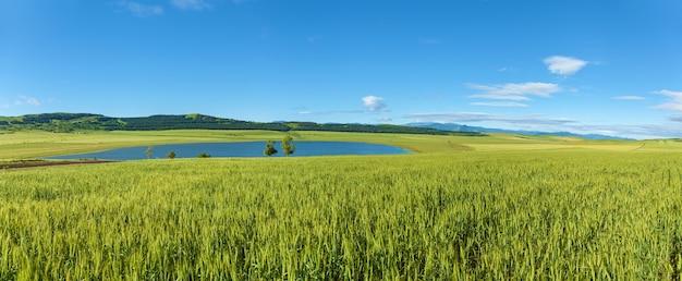 구름과 하늘에 대 한 녹색 초원입니다. 목초지.