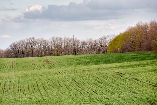 緑の牧草地と森と青い空