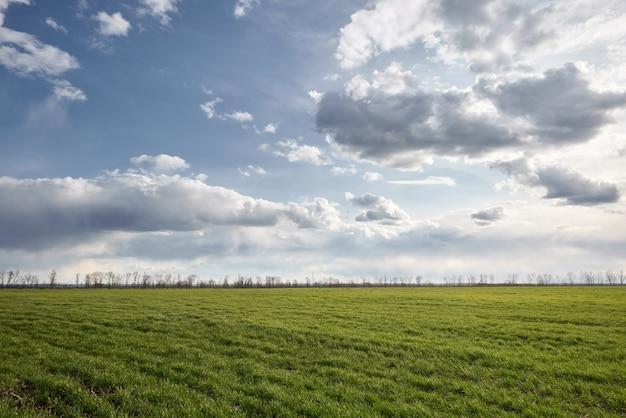 緑の牧草地と地平線上の木と青い空