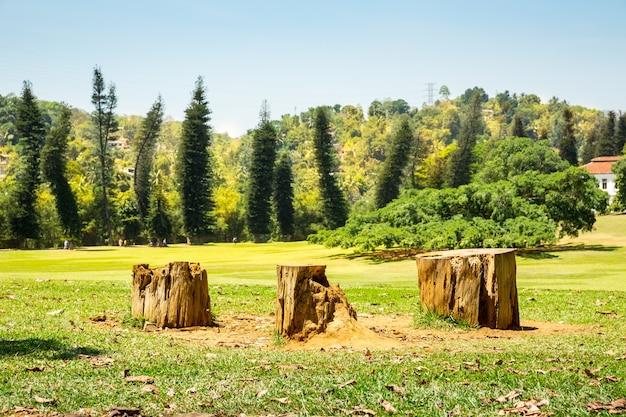 スリランカの村の緑の牧草地と3つの切り株。セイロンの風景