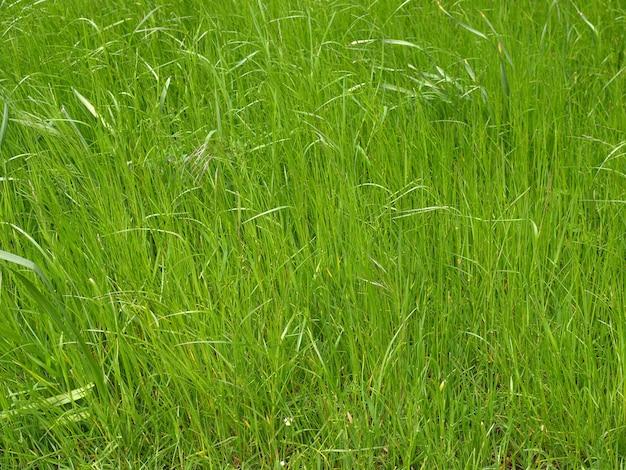 녹색 초원 배경