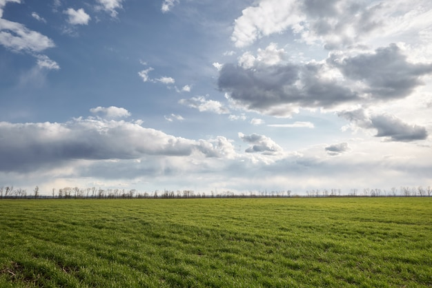 Green meadow and blue sky with trees on a horizon