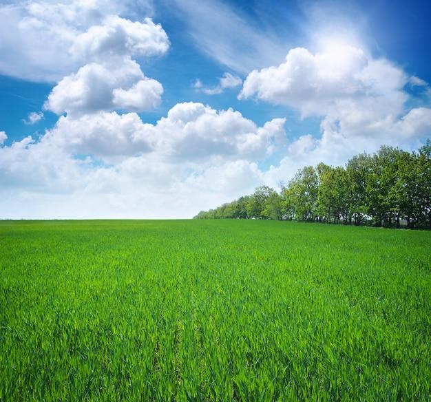 녹색 초원입니다. 자연의 구성.