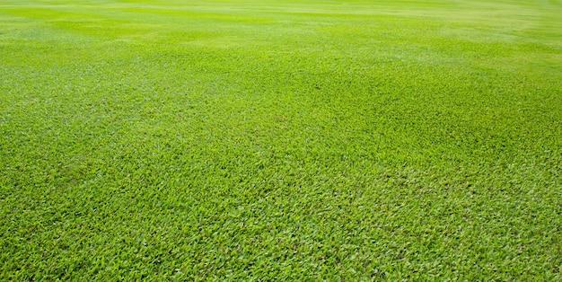 야외 공원에서 푸른 초원 잔디 필드