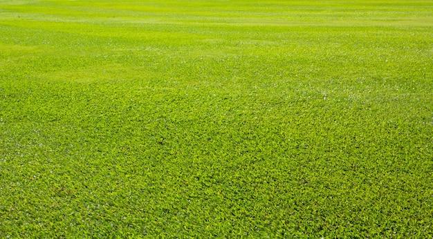 Зеленое поле луговых трав из открытого парка