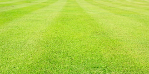 Green meadow grass field from outdoor park