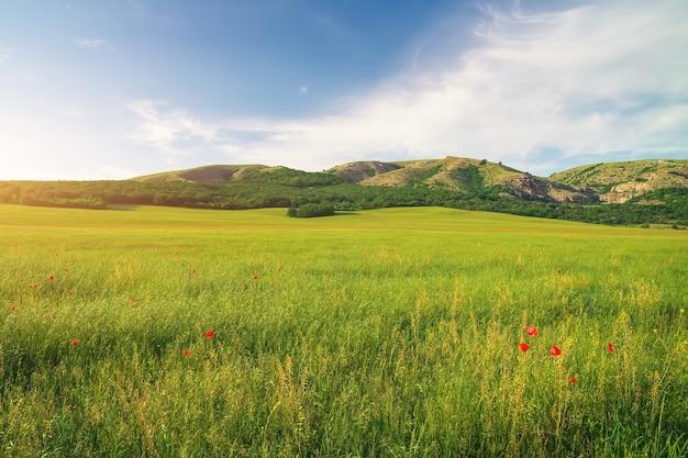 산과 푸른 하늘에 녹색 초원입니다. 자연의 구성.