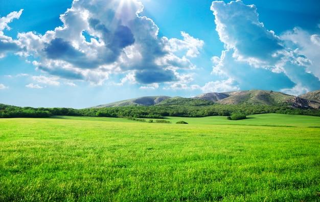 산에서 녹색 초원입니다. 자연의 구성.