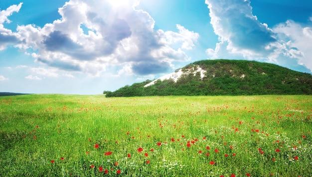 산에서 녹색 초원