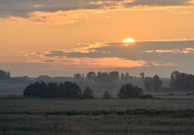 Green meadow in the morning haze trees on the horizon the sun peeking out