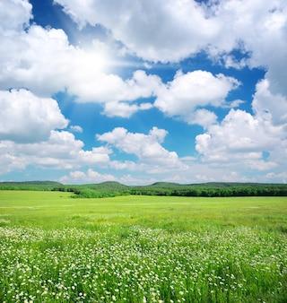 Green meadow in mountains landscape