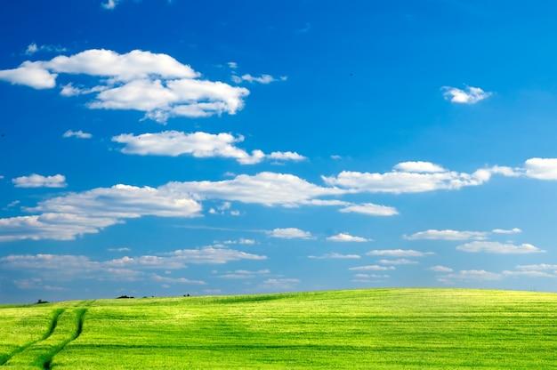 화창한 날에 녹색 초원