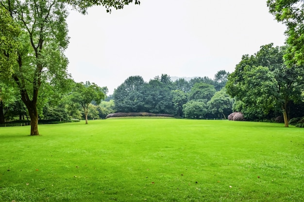 잎이 많은 나무와 녹색 초원