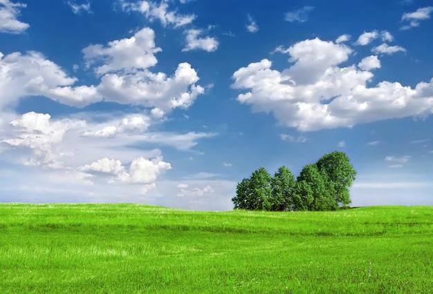 Зеленый луг с деревьями под голубым небом