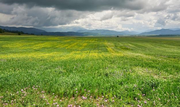 山と山の雲を背景に黄色の花と緑の牧草地。アルタイ
