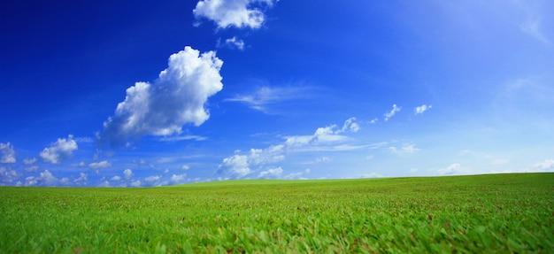 青い空と緑の牧草地