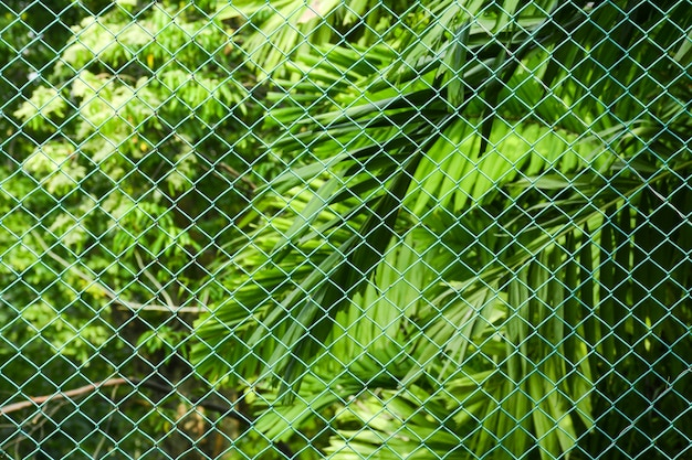 Green metal net at the park