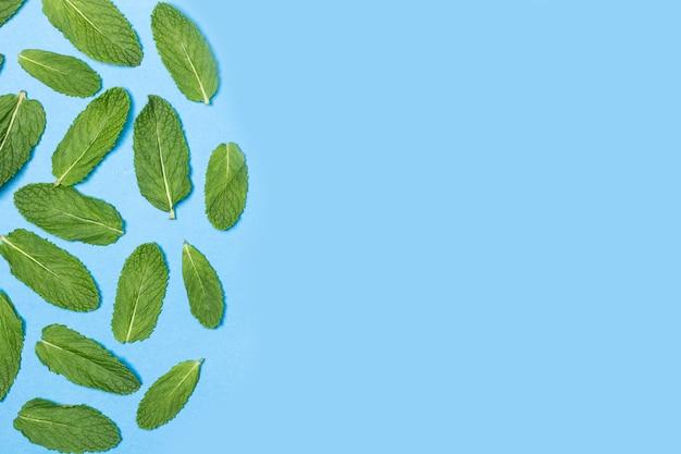 Зеленые листья мяты на синей стене