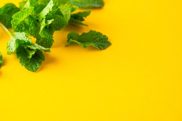Green mint leaves on yellow background. summer cocktail drink ingredients.