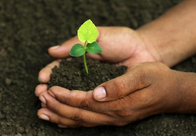 手持ちの緑のツルレイシ植物