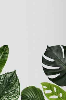 디자인 공간이 있는 녹색 monstera 잎 배경
